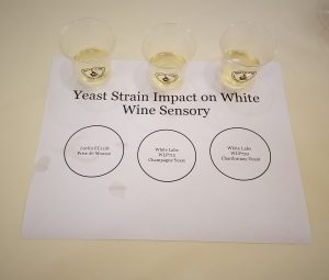 Wine Yeast Strain Trials